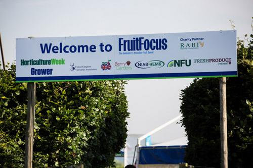 Welcome to Fruit Focus